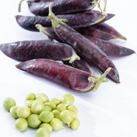 Blauwschokker Pea Seeds 1.95 - 4