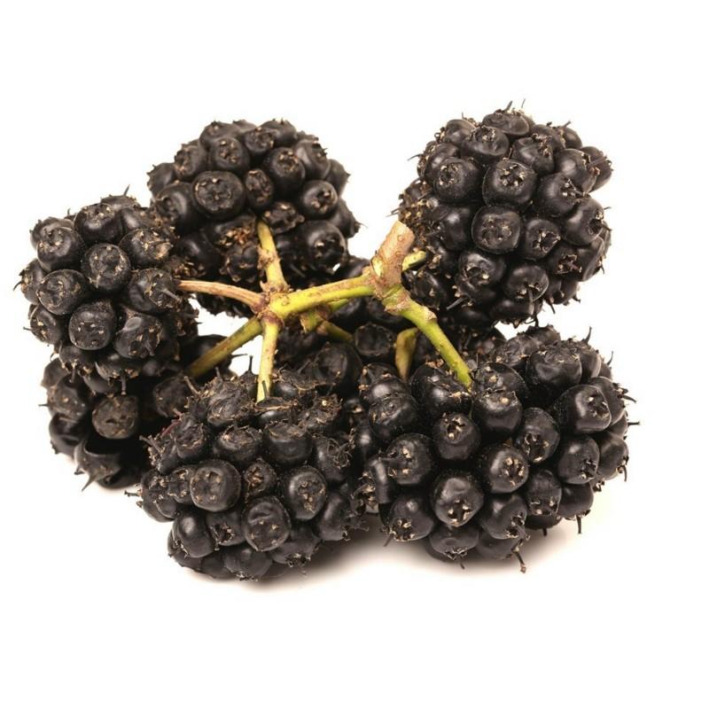 Siberian Ginseng Seeds, Eleuthero or Ciwujia 3 - 7