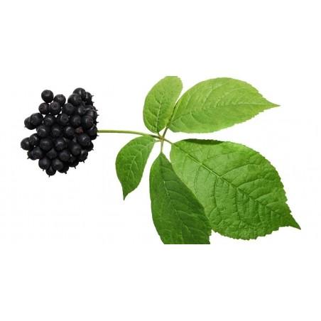 Семена Элеутероко́кк колю́чий, Ди́кий пе́рец, Чёртов куст 3 - 4