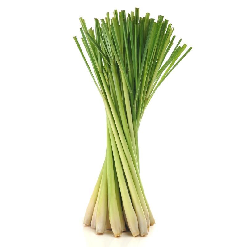 Graines de Lemongrass - Citronnelle (Cymbopogon citratus) 2.95 - 4