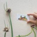 Semillas de Romero, reina de las plantas aromáticas