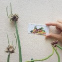 Σπόροι Δενδρολίβανο