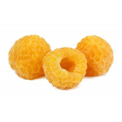 Yellow Raspberry Seeds (Rubus idaeus) 2.049999 - 5
