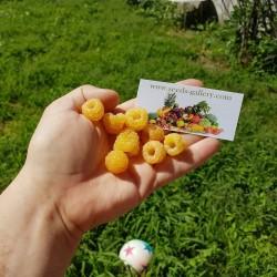 Жёлтая малина cемена (Rubus idaeus) 2.049999 - 6