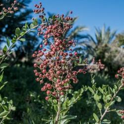 Лавсо́ния неколю́чая, Хна семена (Lawsōnia inērmis) 2.5 - 1