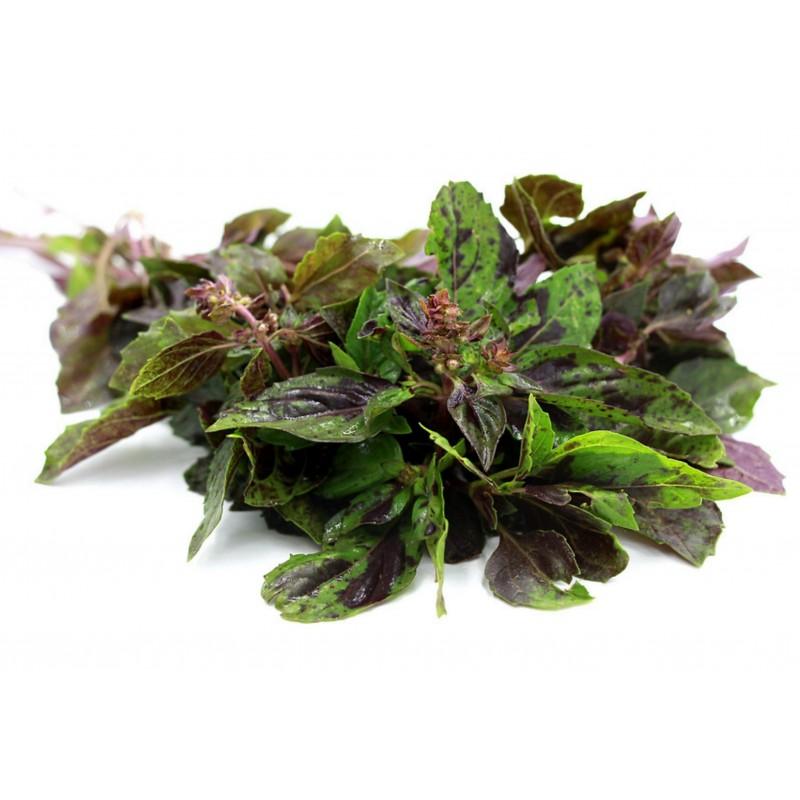 Sementes de manjericão ALCAÇUZ - ARARAT (ocimum basilicum) 1.95 - 1