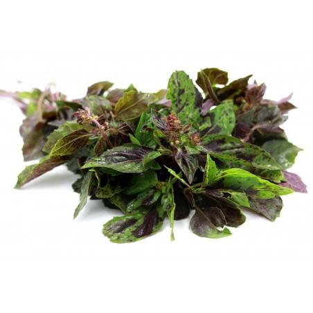 Sementes de manjericão ALCAÇUZ - ARARAT (ocimum basilicum)