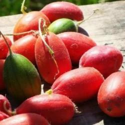 Sementes de Fruta Manchu...