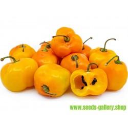 Rocoto Manzano Chili Samen
