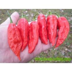 Sementes de Bhut Jolokia Pimenta