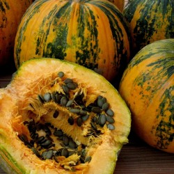 Oilseed Pumpkin - Naked...