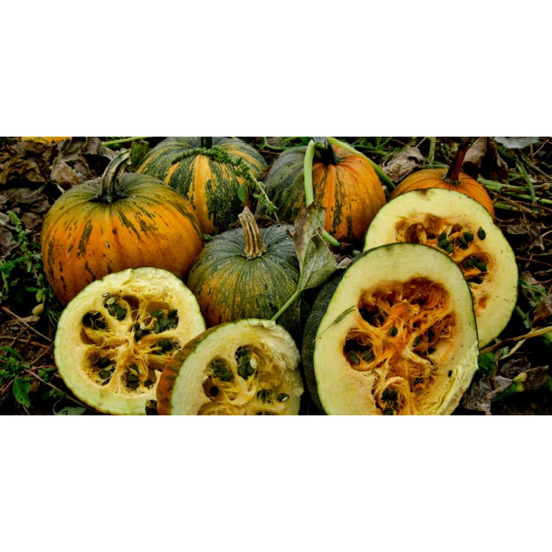Prince Crown Pumpkin Seeds