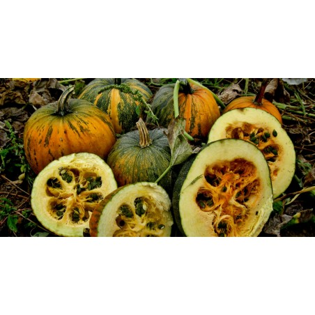 Semillas de calabaza Prince Crown
