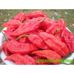 Bhut Jolokia Seeds