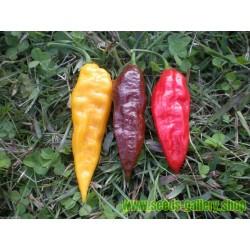 Bhut Jolokia Samen Red, Chocolate, Orange, Yellow Schärfste Chili der Welt