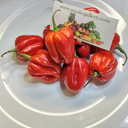 100 Σπόροι Τσίλι - πιπέρι Habanero Κόκκινο 5.45 - 2