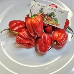 100 Семена перца Habanero Red 5.45 - 2