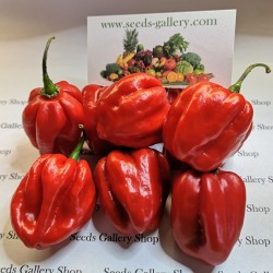 100 Seeds Habanero Red
