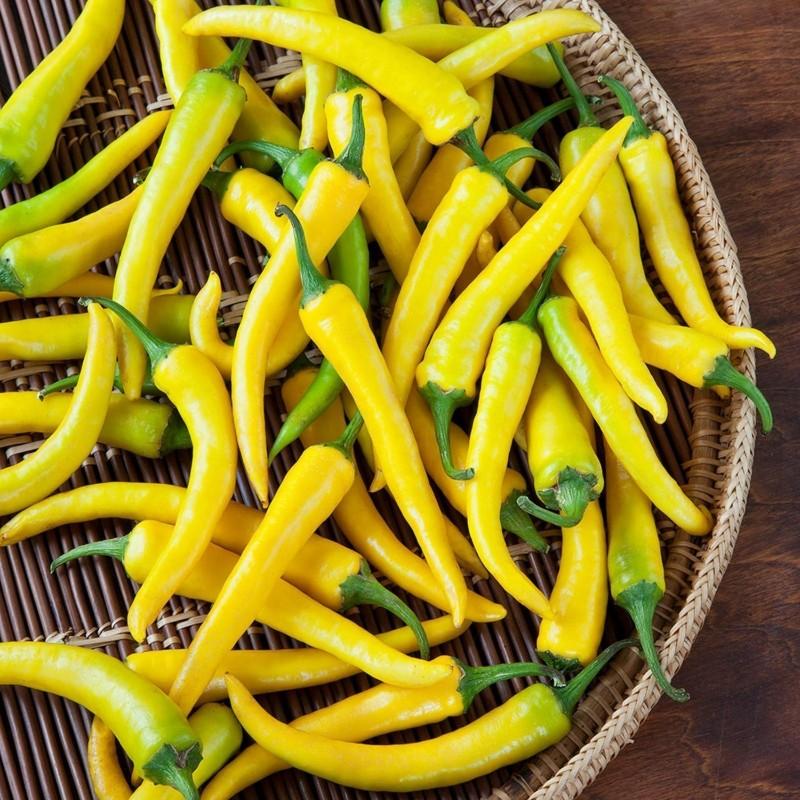 """Serbian hot chilli 150+ Seeds """"Yellow Feferona"""" 2.85 - 3"""