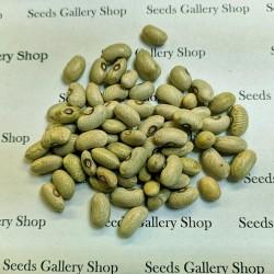 Green Beans Seeds SLAVONSKI ZELENI 1.35 - 2
