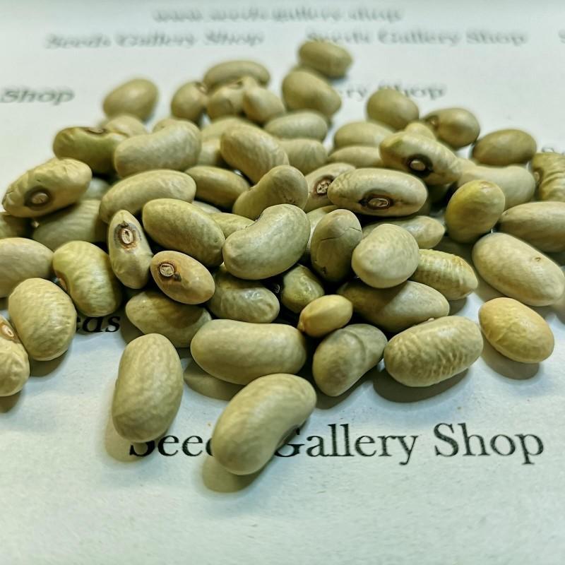 Graines de haricots verts SLAVONSKI ZELENI 1.35 - 1