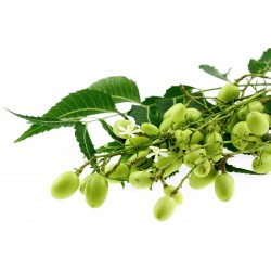 Semillas de NIM, MARGOSA o LILA INDIA 2.5 - 4
