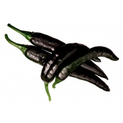 Pasilla Bajio Seeds - Black...