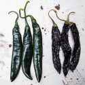 Semillas de Bhut Jolokia - Naga jolokia