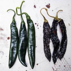 Pasilla Bajio Seeds - Black Chili 1.95 - 4