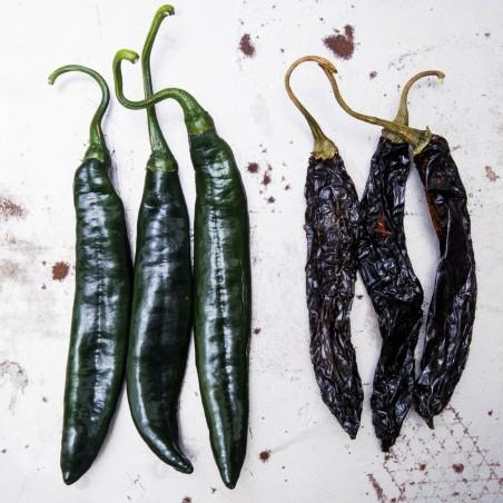 Pasilla Bajio Frön Black Chili (Capsicum annuum) 1.95 - 4