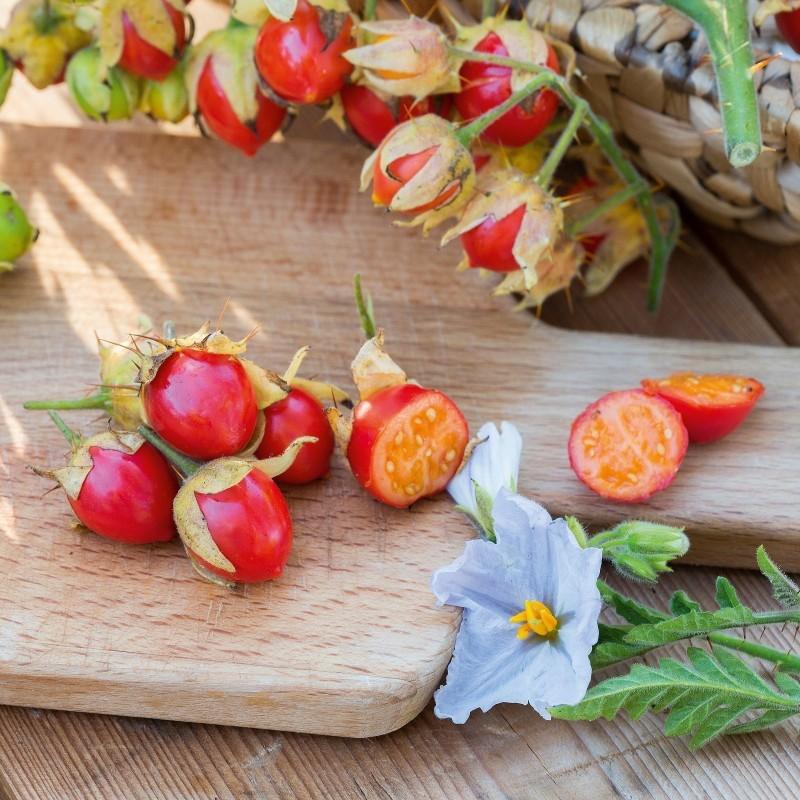 Litchi Tomato 1000 Sementes - Morelle de Balbis 85 - 11