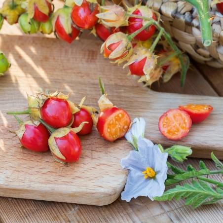 Litchi Tomato 1000 Seed - Morelle de Balbis 85 - 11