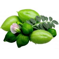 Sementes de Grão-de-bico Branco (Cicer arietinum) 1.85 - 5