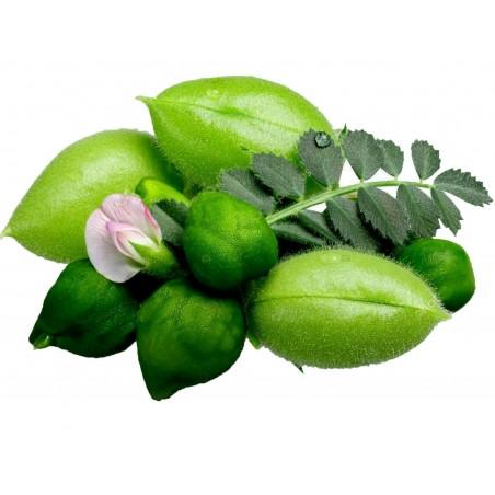 Σπόροι Ρεβιθιά (Cicer arietinum) 1.85 - 5