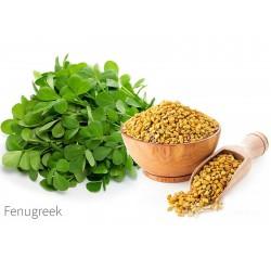 Fenugreek Seeds (Trigonella foenum-graecum) 1.55 - 2