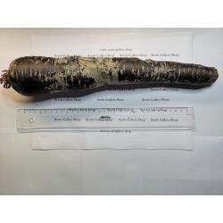 Semi di carote giganti Purple Dragon 1.55 - 5