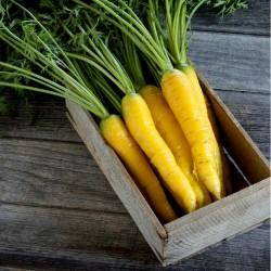Riesen gelbe Möhre Karotte Samen 1.5 - 2