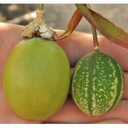 Sementes de Passiflora maliformis 1.7 - 1