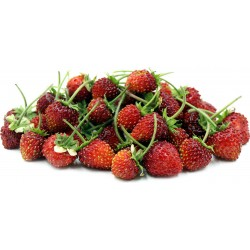 Wild Strawberry Seeds ''RUGIA'' (Fragaria vesca) 2.5 - 2