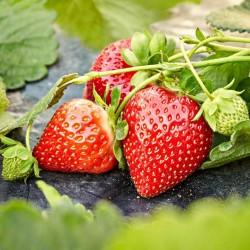 Σπόροι Φράουλα κόκκινη 1.95 - 1