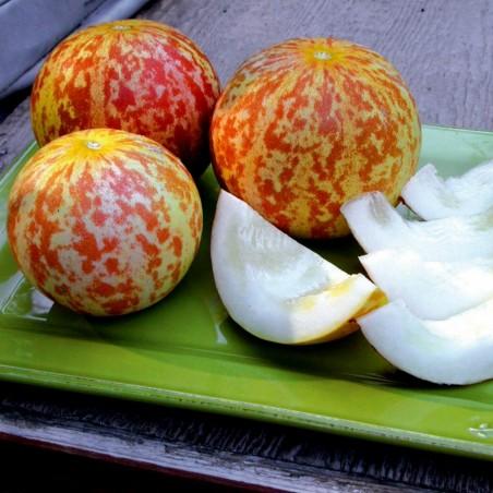 Armenische Tiger Melone BIO Samen 2.95 - 4