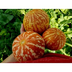 Semillas De Melon Tigre (Tigger Melon) 2.95 - 5