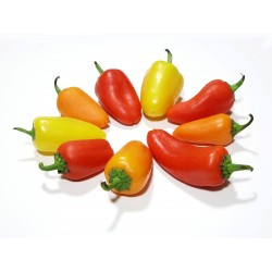 Hot Chilli Pepper Seeds SANTA FE GRANDE - GUERO 1.55 - 6