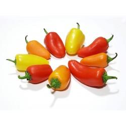 Σπόροι Τσίλι - πιπέρι SANTA...