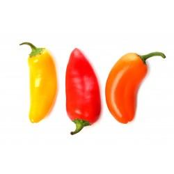 Hot Chilli Pepper Seeds SANTA FE GRANDE - GUERO 1.55 - 3