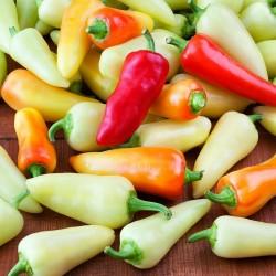 Hot Chilli Pepper Seeds SANTA FE GRANDE - GUERO 1.55 - 4