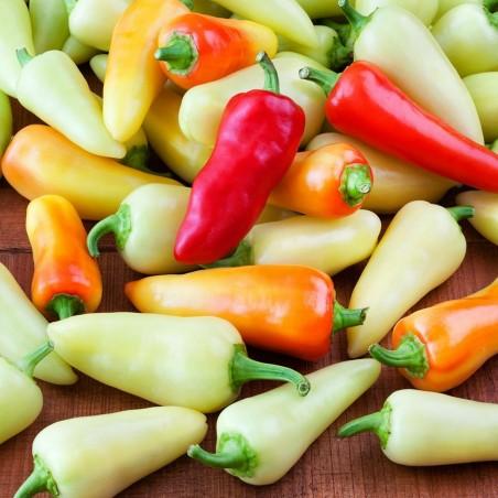 SANTA FE GRANDE - GUERO - Chili Samen 1.55 - 4