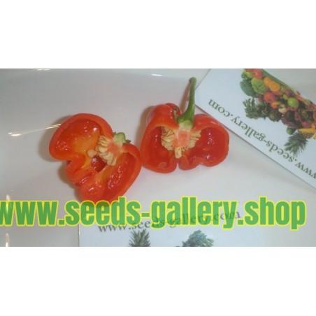 Σπόροι Τσίλι - πιπέρι Habanero Senegal