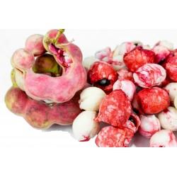 Σπόροι Μανίλα Tamarind (Pithecellobium dulce) 2.5 - 1