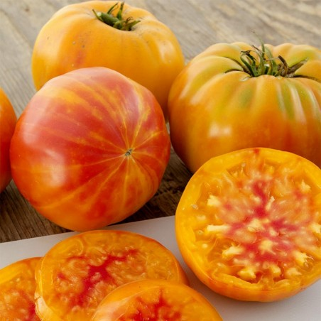 Beefsteak Tomato BIG RAINBOW Finest Seeds 2.5 - 4